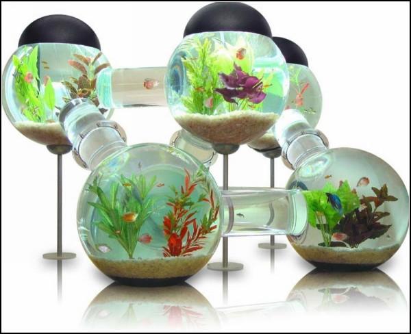 Обзор самых оригинальных декоративных аквариумов