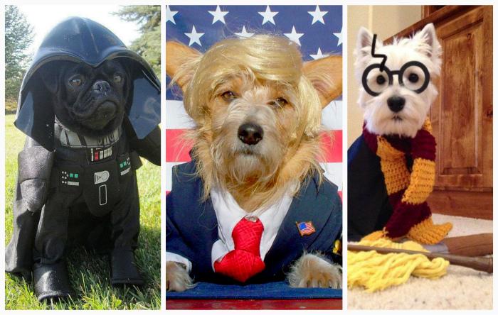 10 хэллоуинских костюмов для собак, которые гарантировано поднимут вам настроение.