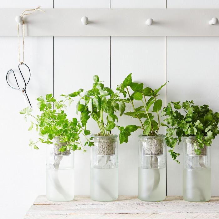 Сад в бутылке от Modern Sprout