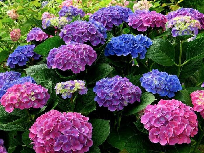 От розового к голубому через…гвоздь.