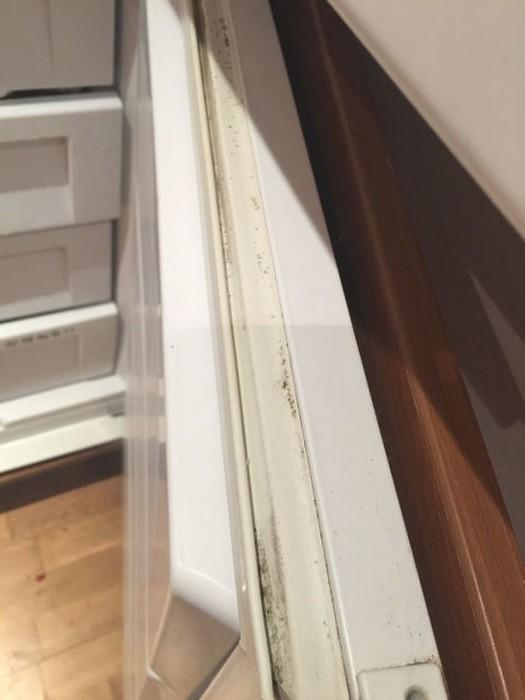 И в холодильнике может жить плесень.