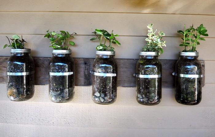 Самый красивый способ выращивать петрушку.