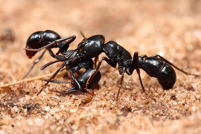 Кофе против муравьёв.