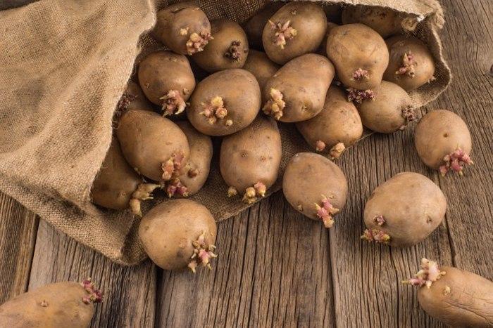 Проросший картофель не стоит употреблять в пищу.