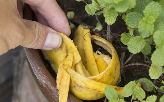Банановая кожура для комнатных растений.