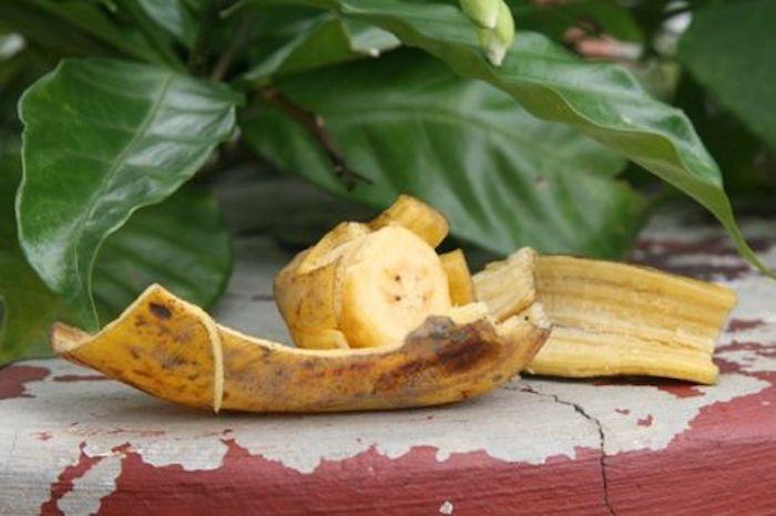 Банановая кожура против муравьёв и тли.