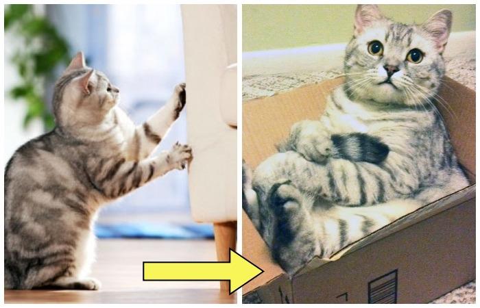 Отучаем кота портить мебель.
