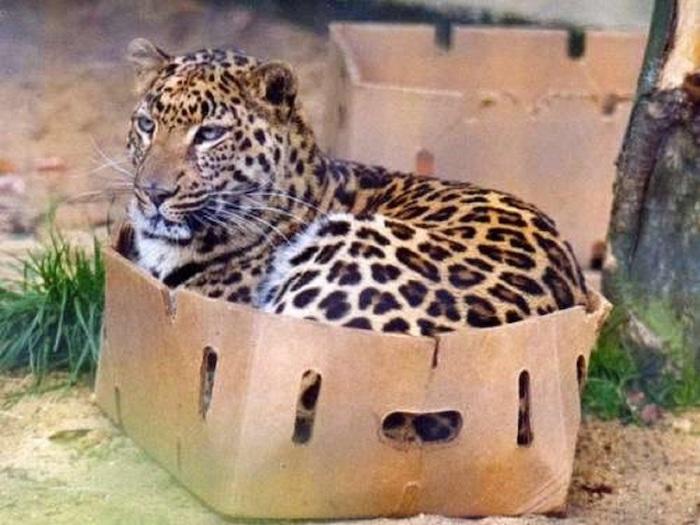 Даже очень больше котики любят коробки.