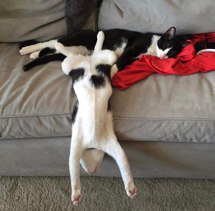 Котики такие котики.