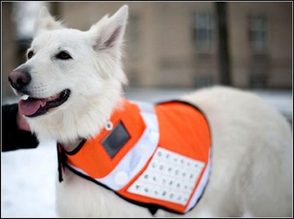 Технологичный жилет для собак-спасателей Messenger Dog