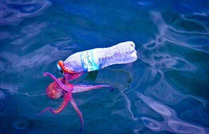Даже осьминогу сложно открыть «тугую» пластиковую бутылку.