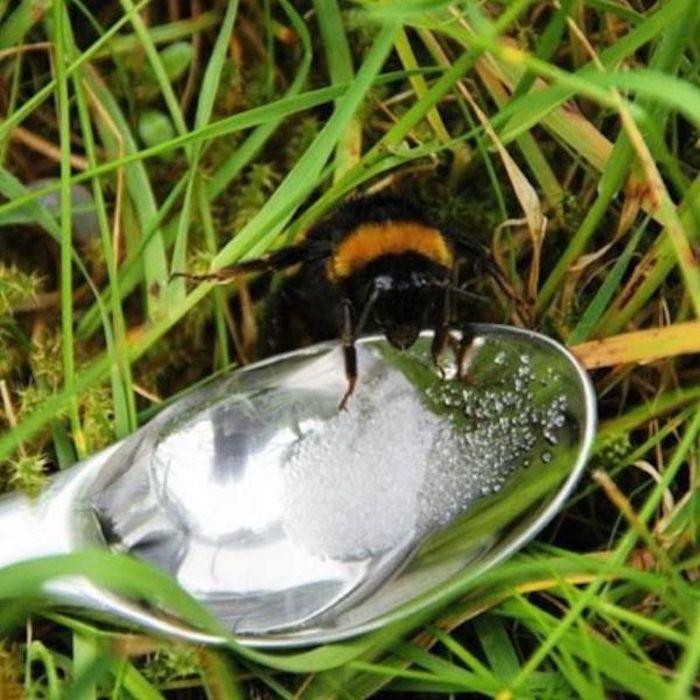 Без пчёл человечество долго не протянет.