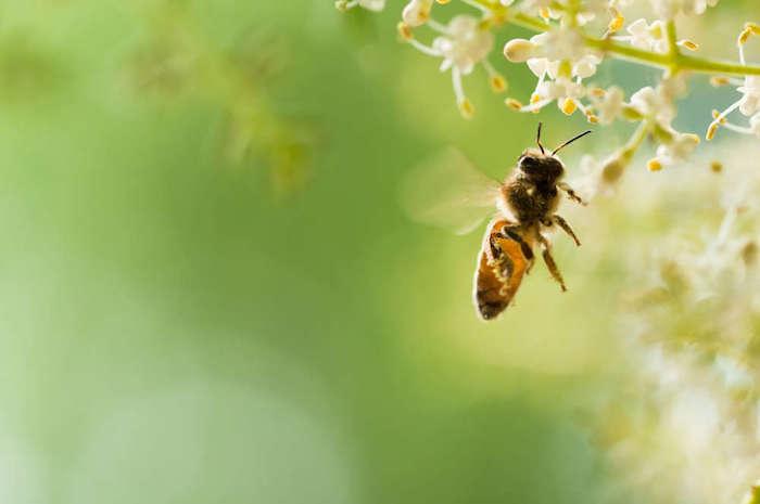 В благодарность пчёлы сделают ваш сад ещё красивее.