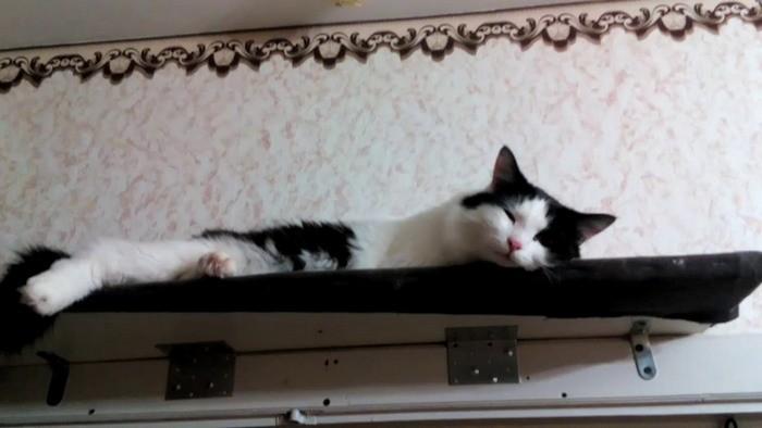 На верхней боковушке хорошо может быть только коту.