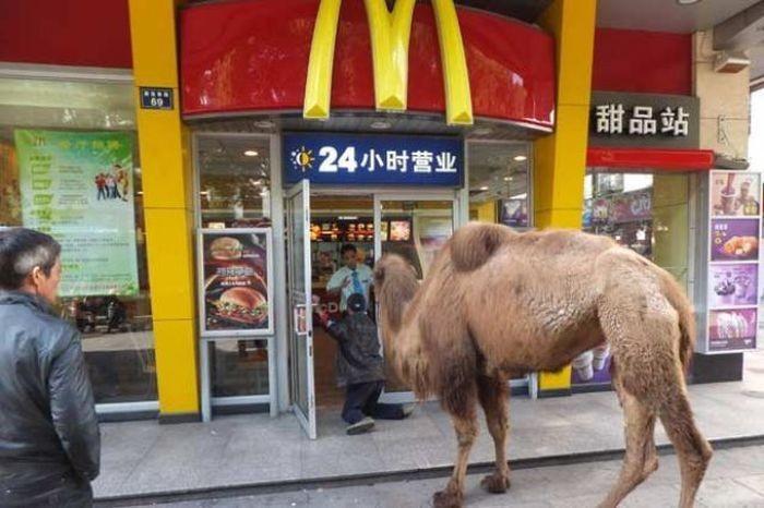 Кого только не встретишь в «Макдональдс».