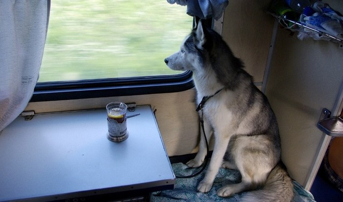 А за билет, пассажир, придётся заплатить…