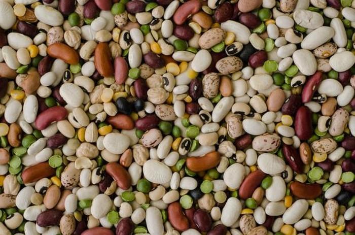 Бобы – надёжный источник белка и калорий в экстренных ситуациях