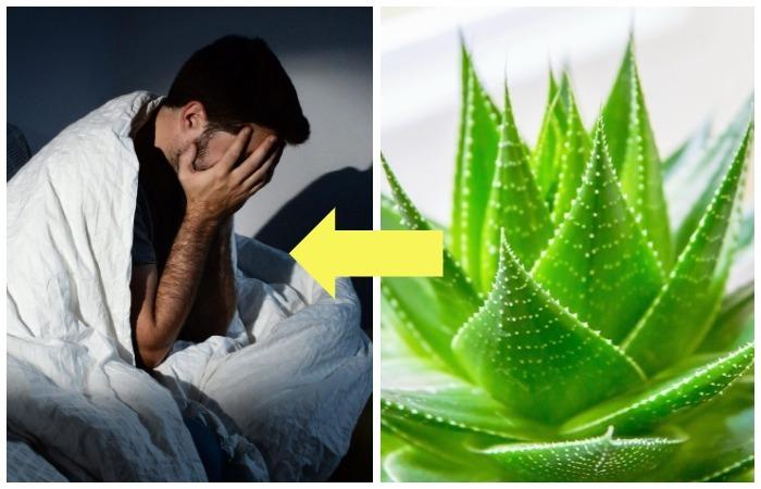 ТОП-5 растений против бессонницы.