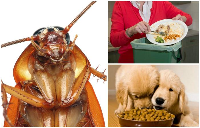 6 золотых правил, которые надёжно избавят от тараканов в доме