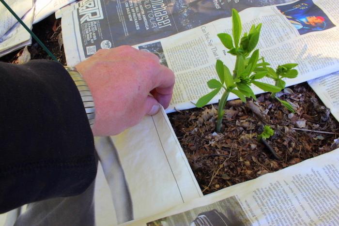 Не забудьте оставить доступ «хорошим» растениям.