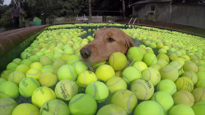 На что ещё способен теннисный мяч?
