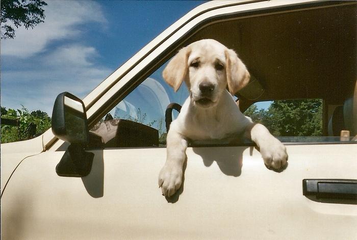 9 вещей, которые не стоит оставлять в машине
