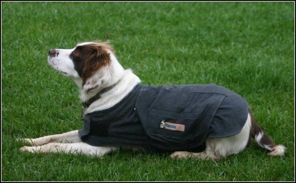 Жилет для собак успокоит с помощью...объятий