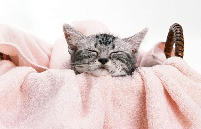 Хорошее полотенце – мягкое и свежее полотенце