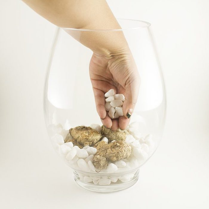 Камни зафиксируют луковицы.