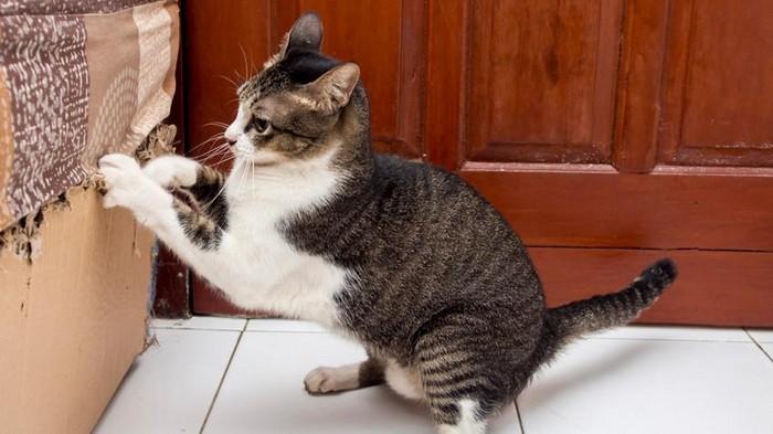 Доходчиво объясняем коту, что так делать не надо.