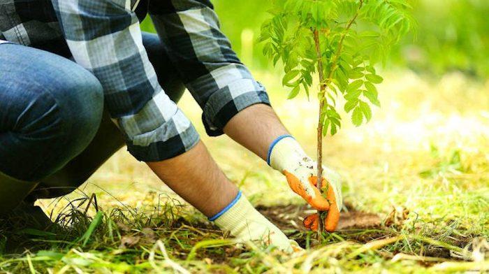 Мужчина начал высаживать вокруг фермы дубы.