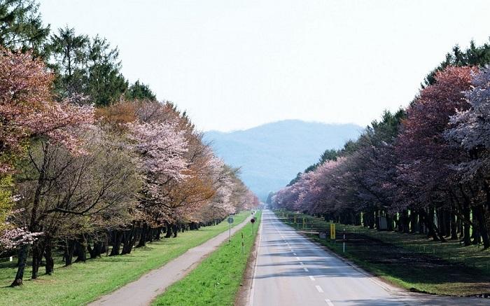 Живописная Япония/ Фото: wallhere.com