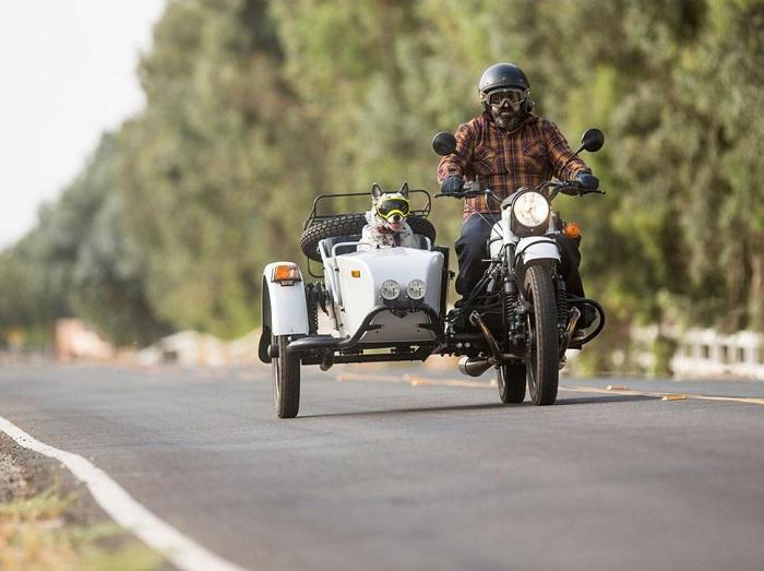 Так можно перевозить животных в Ботсване/ Фото: mototeamrussia.com