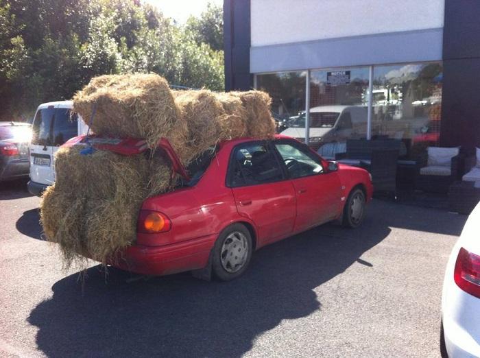 В Австралии нельзя перевозить сено на легковых автомобилях/ Фото: autowise.com