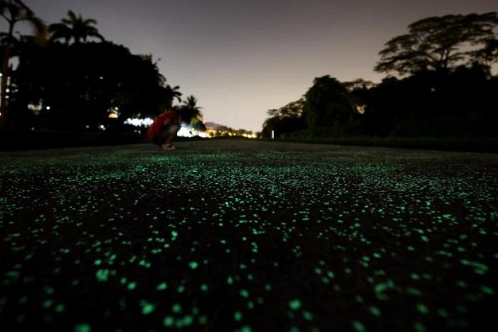 Светящаяся ночью дорога в Сингапуре/ Фото: straitstimes.com