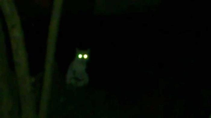 Глаза дикого животного в темноте/ Фото: twitter.com