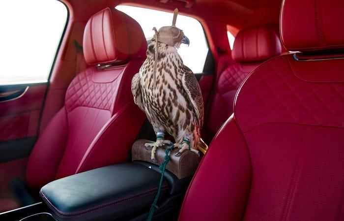 Насадка для сокола в Bentley Bentayga Falconry/ Фото: businessinsider.com