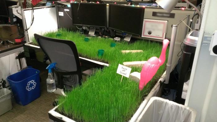 Сотруднику, работающему за этим столом придется купить маленькую газонокосилку.
