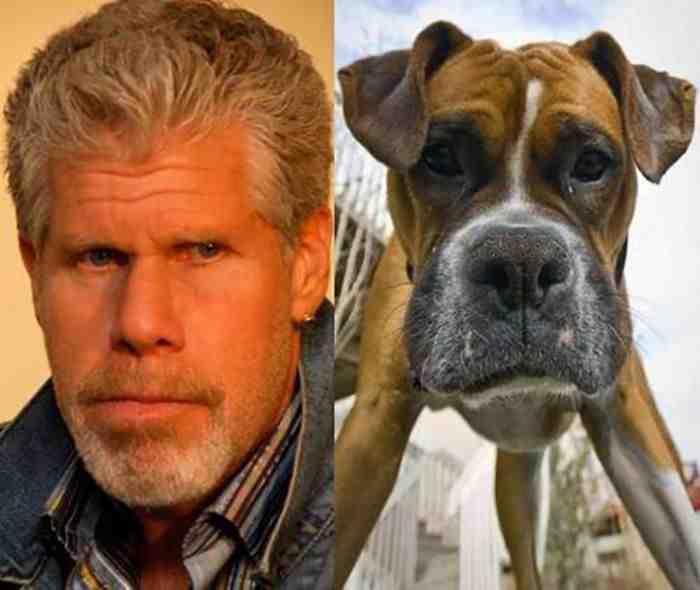 Собака - Плохой парень из голливудских фильмов