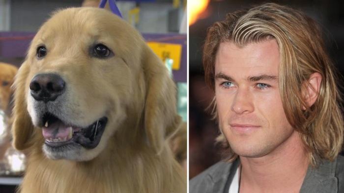 Собака - Какой-то блондинистый смазливый актер