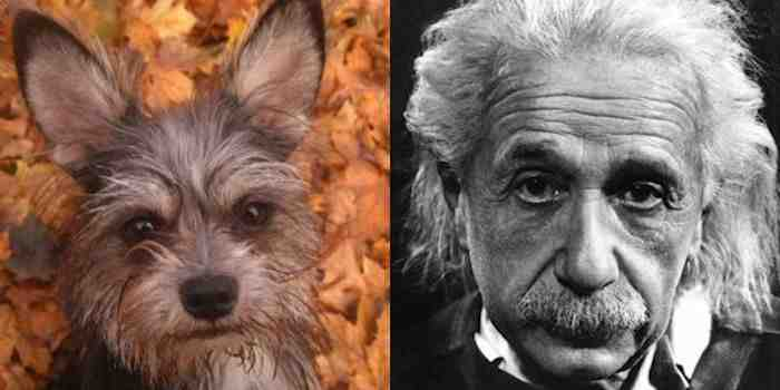Собака - Энштейн