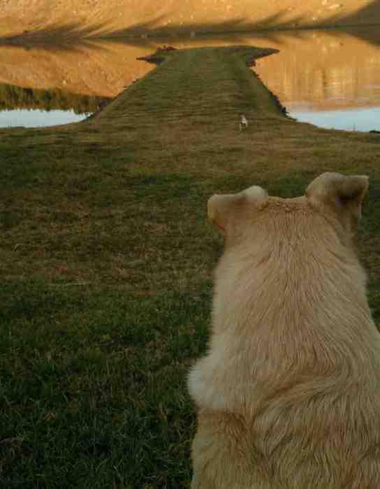 Собака - Мыс на речном берегу