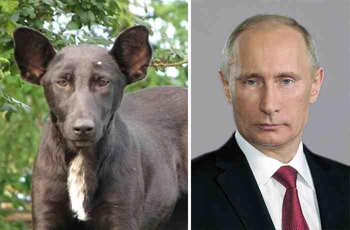 25 невероятных собак-двойников, как две капли похожих на кого-то другого