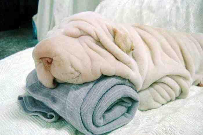 Собака - Полотенце