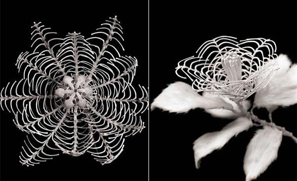 Философия жизни и смерти: Honebana ‒ печальные цветы из костей