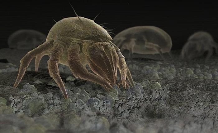 Пылевые клещи дерматофагоидесы.