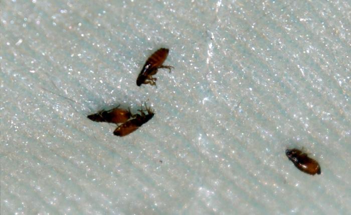 опасные паразиты в вашем организме