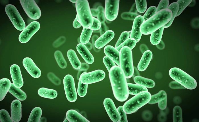 Болезнетворные бактерии.