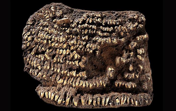 Самая древняя в мире сумка