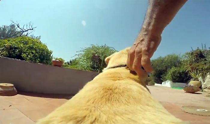 Пёс, который любит купаться